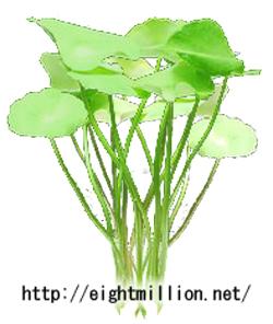 水草:ウォーターマッシュルーム