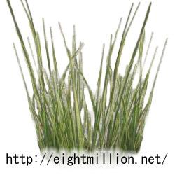 水草:アコルス・バリエゲイタス