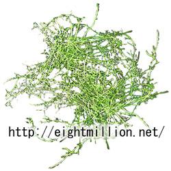 水草:イトタヌキモ