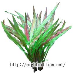 水草:クリプトコリネ・アルビダ