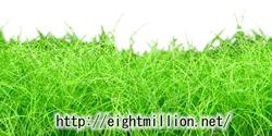 水草:ヘアーグラス