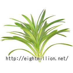 水草:パイナップルプラント
