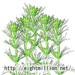 水草:バコパ・ミリオフィロイデス