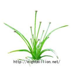 水草:ヒロハイヌノヒゲ